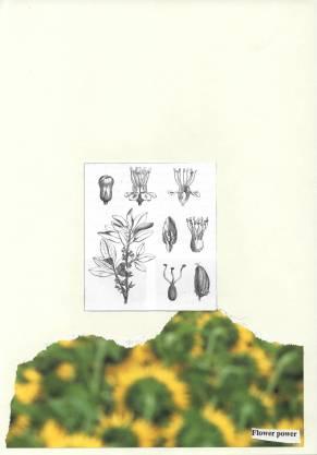 """Flower powder does not kom van dees planten"""